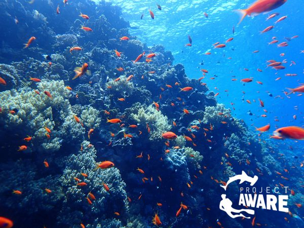 Coral_Reef_Conservation